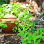 Buddha statue — Stock Photo #38026911