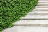 Schodiště s rostlinou — Stock fotografie