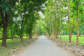 Road and tree — Stock Photo