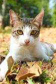 кот лежал на траве — Стоковое фото