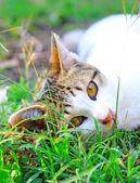 Lying cat — Zdjęcie stockowe