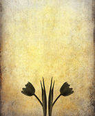 Old paper tulip — Stock fotografie