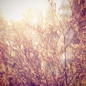 Dried flowers — Stock Photo