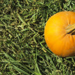 Pumpkin in garden — Stock Photo