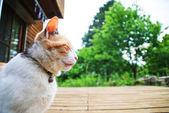 Gato sentado — Foto de Stock