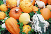 Fresh pumpkin — Stock Photo