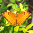 Orange butterfly — Stock Photo #39247229
