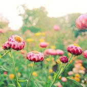 小さな花 — ストック写真