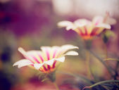 Close up flowers — Stock Photo
