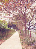 Way to garden — 图库照片