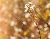 Dry meadow — Stock Photo