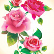Roses flowers - Stockfoto