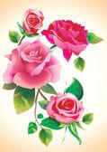 Rosor blommor — Stockfoto