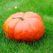 Big pumpkin in the green grass — Foto Stock