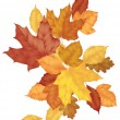 A pile of autumn leaves on white background — Stock Vector