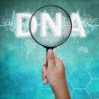DNA, parola nella lente d'ingrandimento, sfondo medical — Foto Stock #12680405