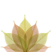 Skeleton leaf abstract background — Stock Photo