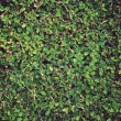 Stock Photo: Green leaves wall background