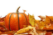 Fall Time — Stock Photo