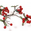 Faux Berry Branch — Stock Photo