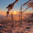 Winter Wonderland — Stockfoto
