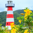 Lighthouse With Colourful Flowerbeds — Stock Photo