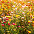Colorful Garden Full With Flower — Foto de Stock