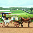 Horse Carriage — Stock Photo #31282107