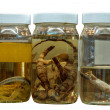 Science Specimens — Stock Photo