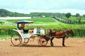 Paard en wagen — Stockfoto