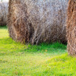 Straw On Green Grass — Stock Photo #34901885