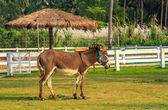 Horse — Foto Stock