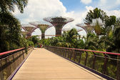 Gardens by the Bay Day View — Stock Photo