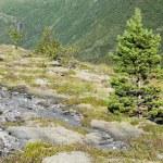 thumbnail of Perennial plants on rural mountain