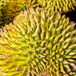 Federation of Thai durian. — Stock Photo