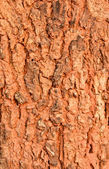 Patterns of tree bark — 图库照片