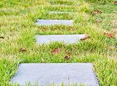 Chodzenie na trawie — Zdjęcie stockowe