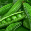 Stock Photo: Green Pea