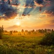 Dawn in a meadow — Stock Photo #19776183