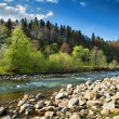 Stock Photo: Landscape with river and forest