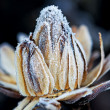 Frozen flower — Stock Photo #19777427