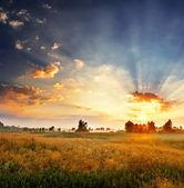 Dageraad in een veld — Stockfoto