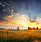 Dawn in a field — Stockfoto