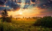 Amanecer en un prado — Foto de Stock
