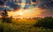 Dawn in a meadow — Stock Photo