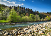 Krajobraz z rzeki i lasu — Zdjęcie stockowe