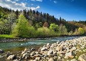 Landschap met rivier en bos — Stockfoto