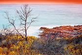 Tree and stones on coast — Stock Photo
