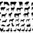 Animals — Vector de stock #14948039