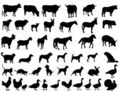 Tiere — Stockvektor